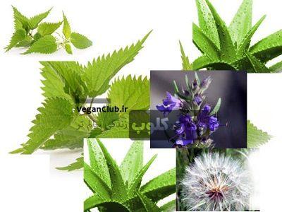 تصویر از ۶ گیاه تصفیه کننده خون را بشناسید