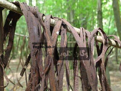 حواص درمانی پوست درخت بید
