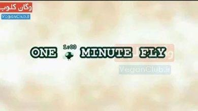 تصویر از انیمیشن تاثیرگذار و زیبای مگس یک دقیقهای